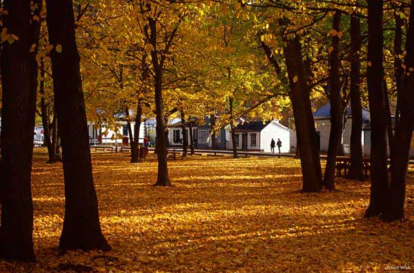 Queenstown Activities: Arrowtown in Autumn