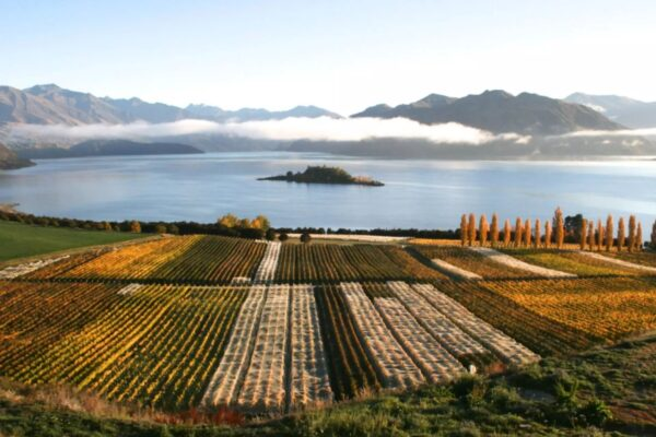 rippon winery wanaka things to do