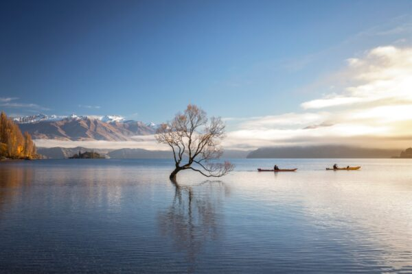 wanaka tree new zealand travel